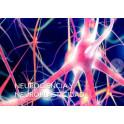 Neurociencia y Neuroplasticidad